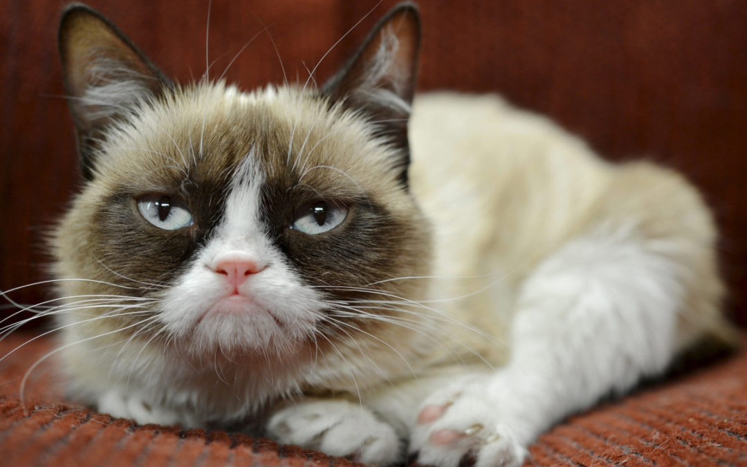 4 Things Your Brand Can Learn From Grumpy Cat